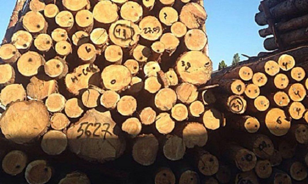 В Одессе разоблачили масштабную схему контрабанды древесины - фото 16243