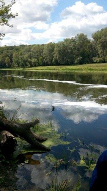 В Луганской области отходы химзавода загрязнили 10 км акватории реки Северсктй Донец - фото 20294