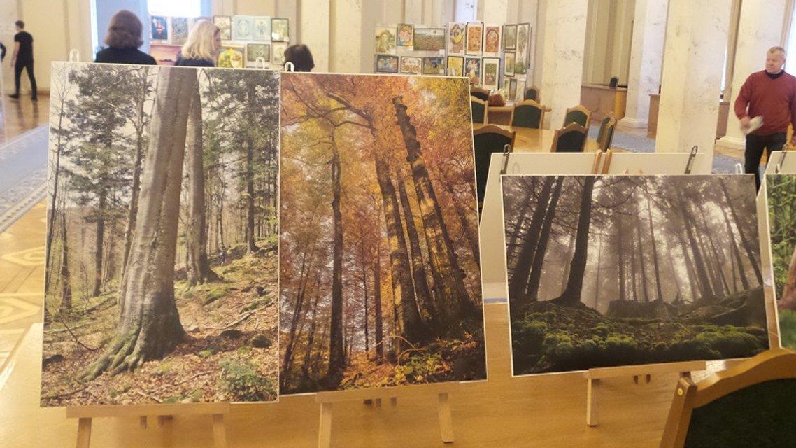 Хто в ліс, хто по дрова. Паралельні реальності Верховної Ради - фото 25630