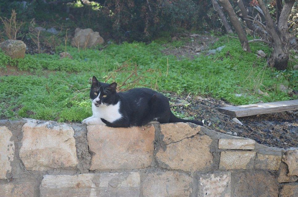 Пагорб весни. Мандрівка до Тель-Авіву - фото 29004