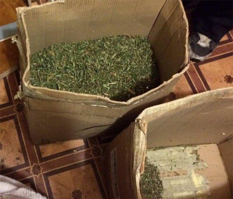 В Кропивницком у местного жителя обнаружили марихуаны почти на 2 млн гривен - фото 35574
