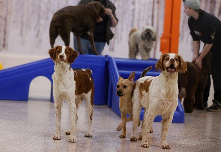 Члени суспільства. Готель для собак у Торонто - фото 44162