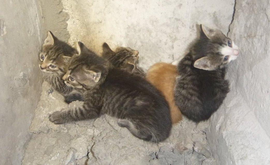 В Киеве волонтеры спасли за один день 17 котят (фото) - фото 43599