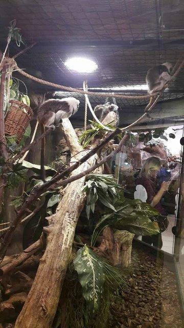 В киевском мини-зоопарке у обезьянок родились двойни (фото) - фото 44927