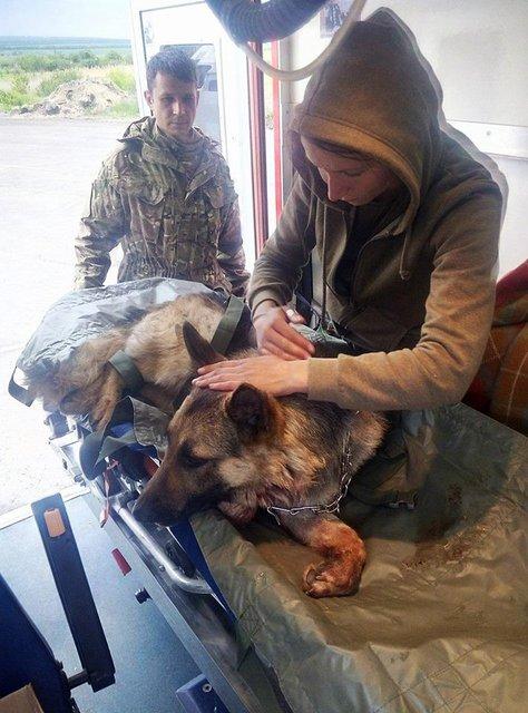 Волонтеры рассказали невероятную историю собаки, закрывшей собой бойцов АТО от обстрела - фото 48173