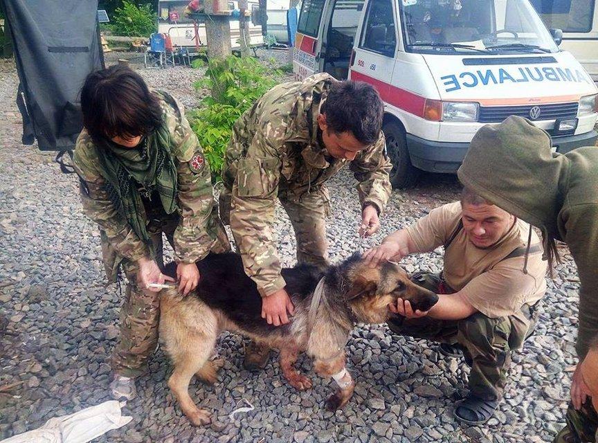 Волонтеры рассказали невероятную историю собаки, закрывшей собой бойцов АТО от обстрела - фото 48170