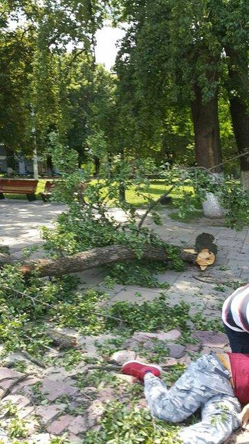 В центре Киева упавшая с дерева ветка сломала 22 кости турецкому спасателю - фото 56021