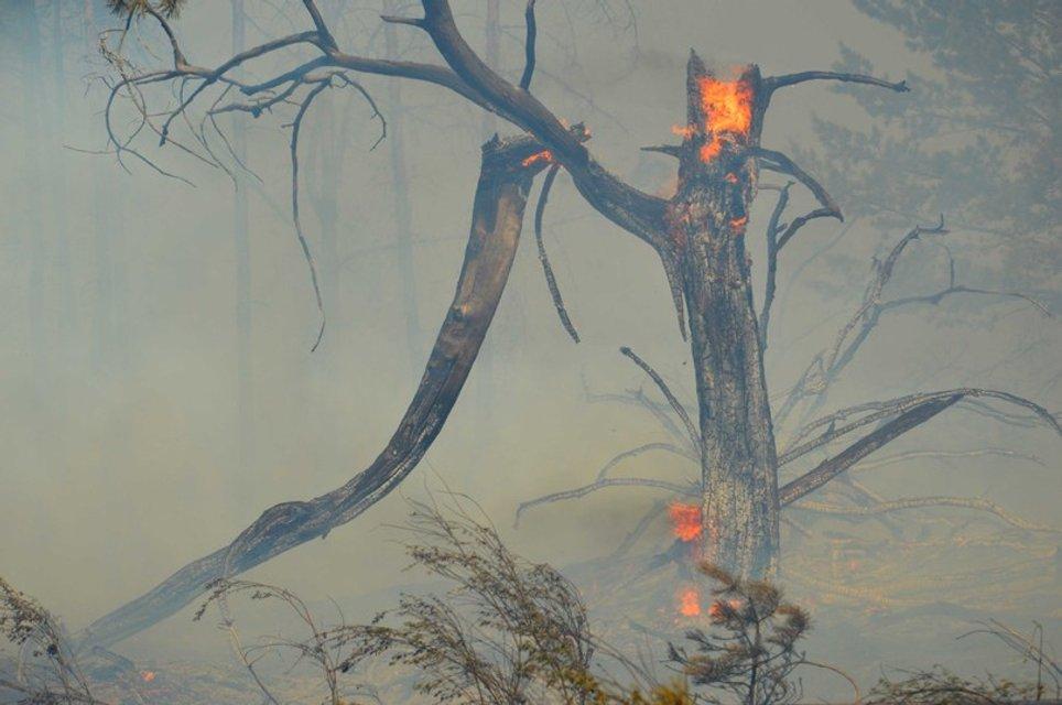 Пожар в районе поселка Гвардейское  - фото 59098