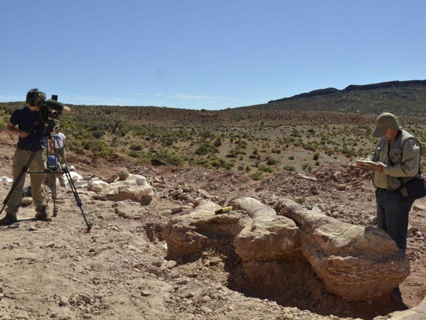 В Аргентине обнаружили самого большого в истории динозавра - фото 64928