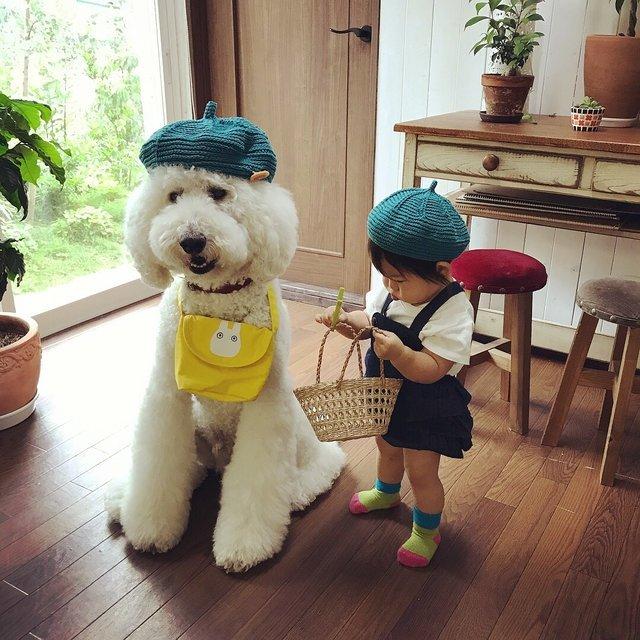 Дружба японской девочки и пуделя взорвала соцсети - фото 63014