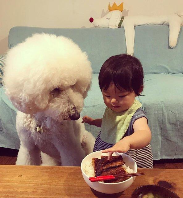 Дружба японской девочки и пуделя взорвала соцсети - фото 63011