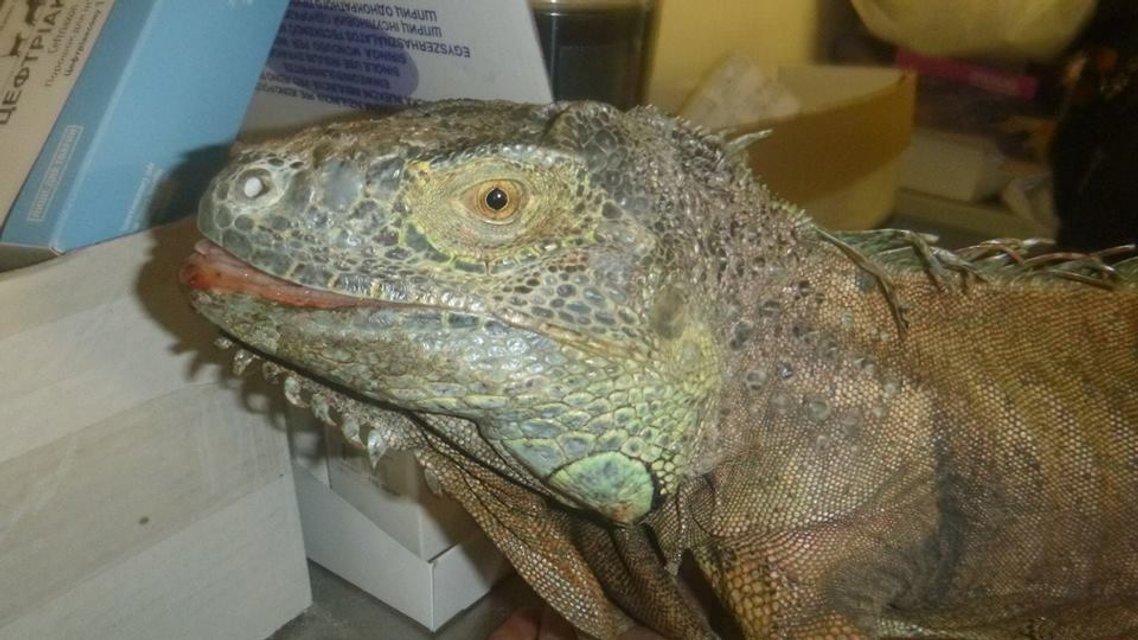 """Съел кабачки: Под Киевом женщина обнаружила """"динозавра"""" в огороде (фото) - фото 64079"""