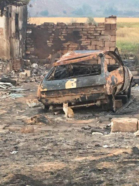 В Донецкой области пожар почти уничтожил целое село - фото 68657