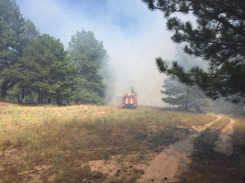 На Херсонщине из-за сильной жары загорелось 7 га леса - фото 62673