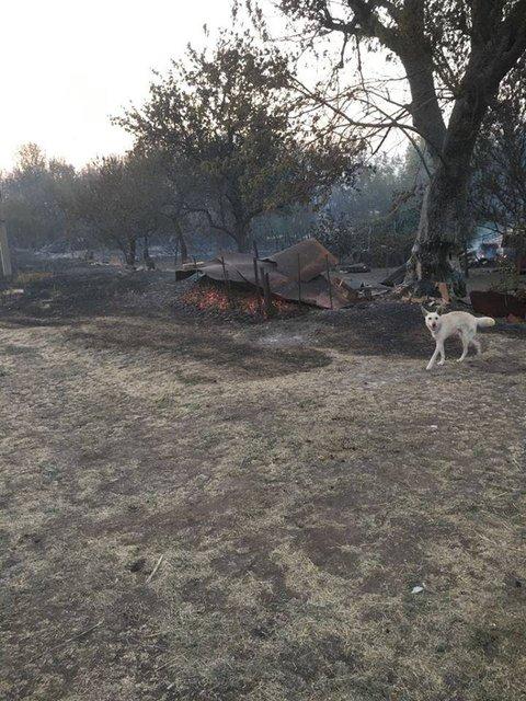 В Донецкой области пожар почти уничтожил целое село - фото 68656