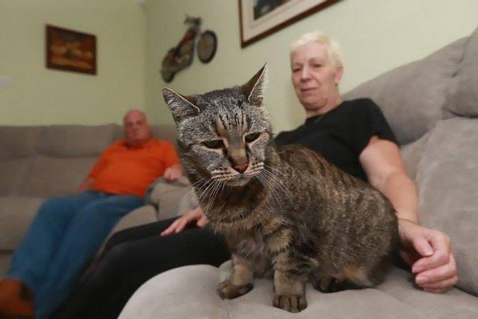 Самый старый кот в мире умер в Великобритании - фото 74082