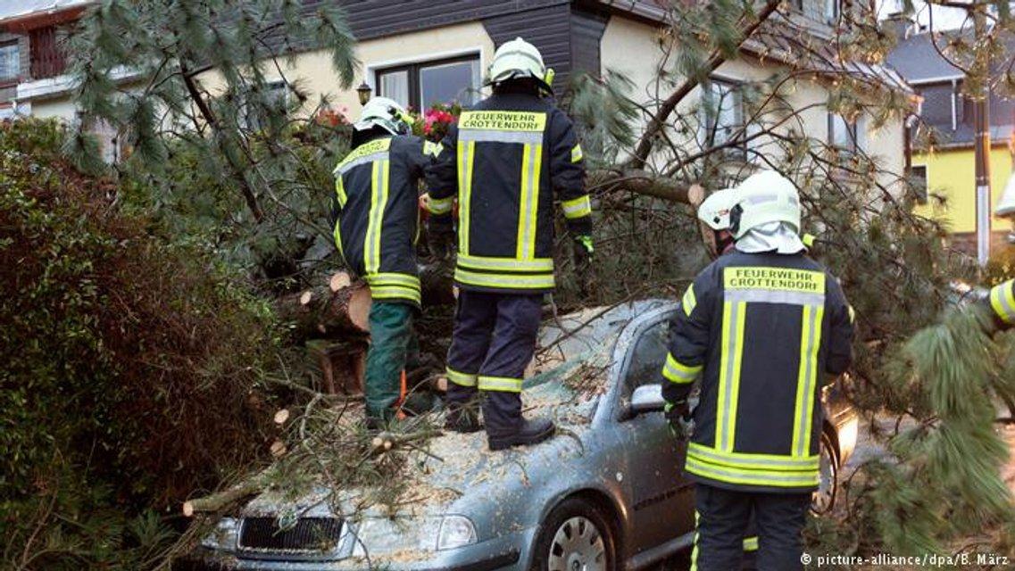 Поваленные ветром деревья убили 4 человек - фото 85782
