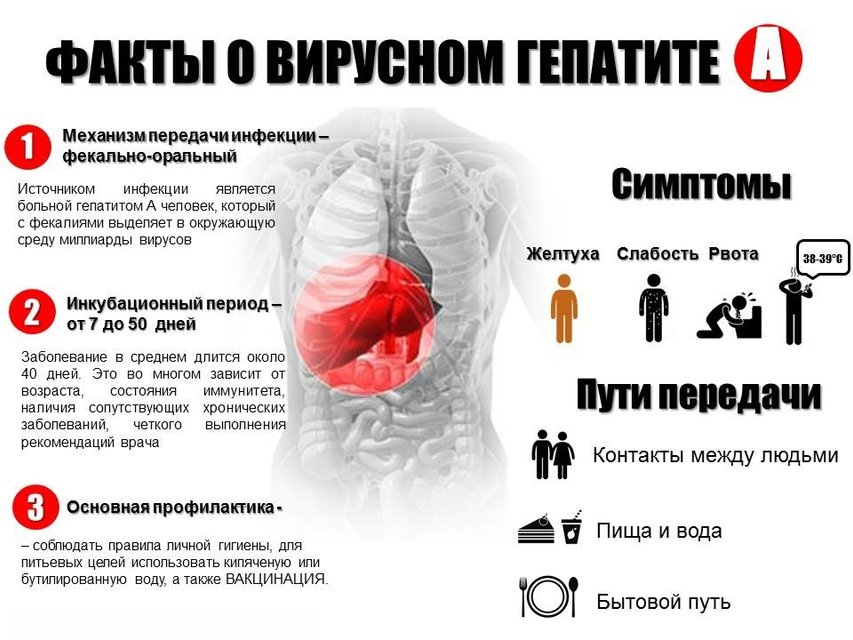 Вспышка вируса гепатит А в Украине: Симптомы, лечение, профилактика - фото 86659