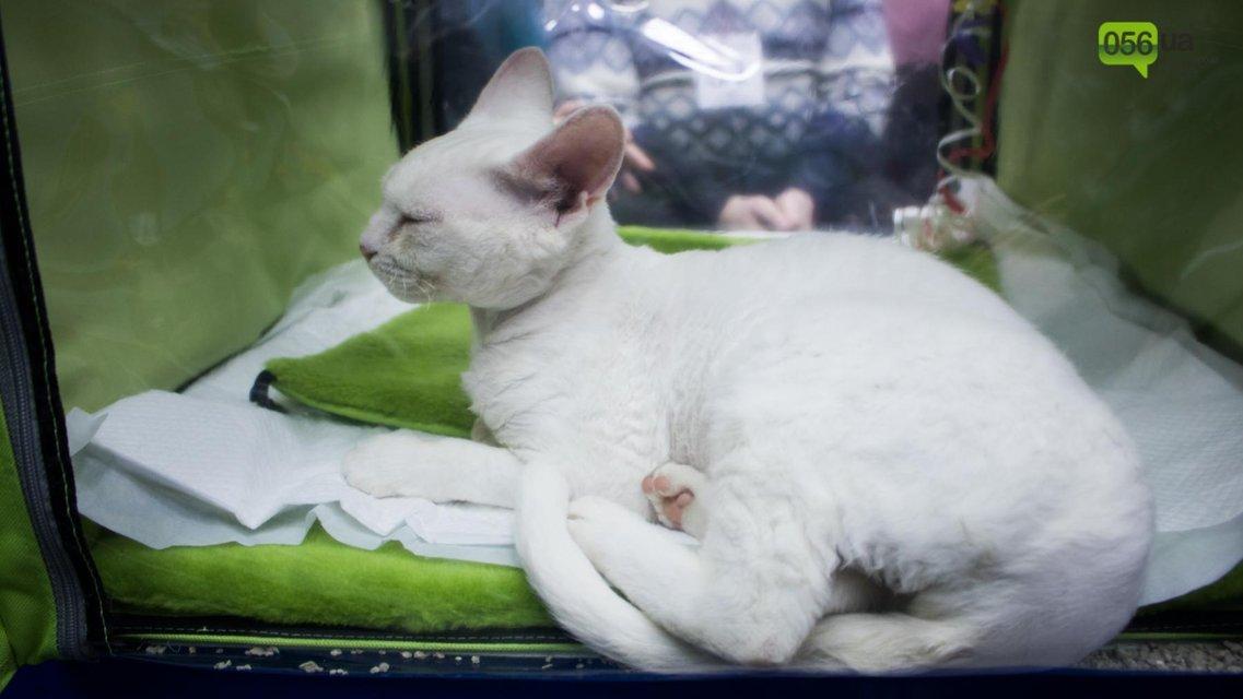 Международная выставка котов в Днепре - фото 94546