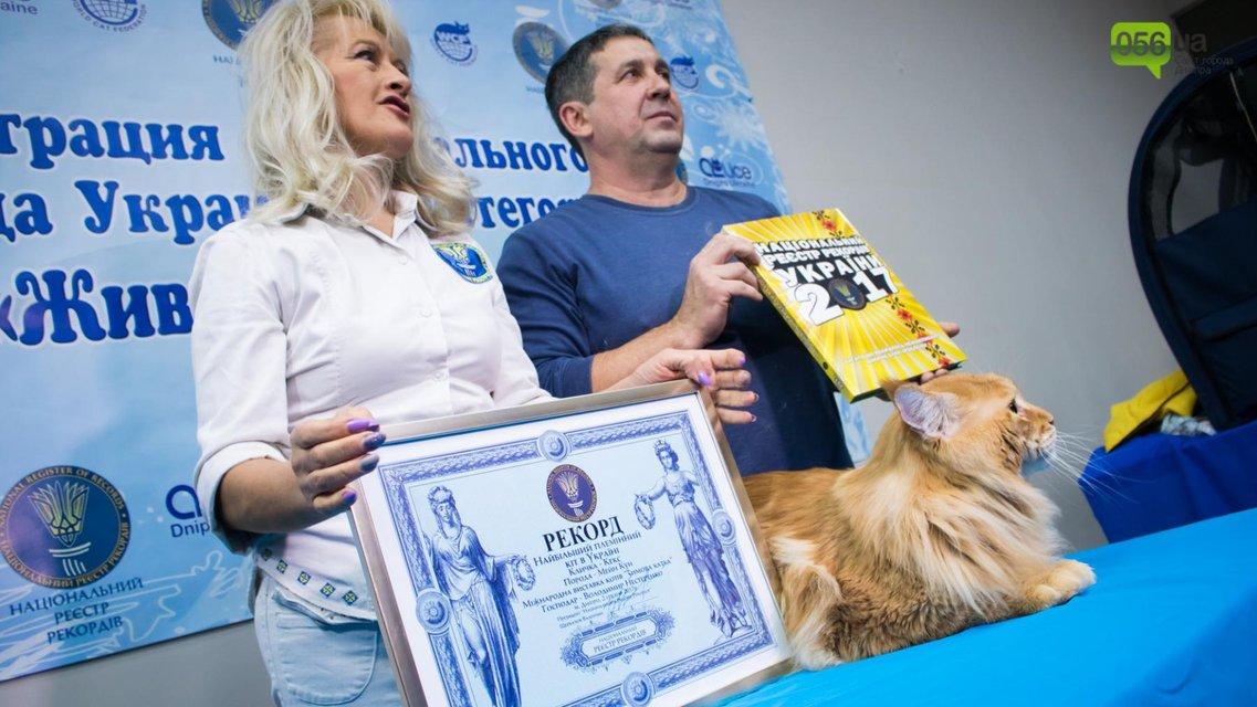 Международная выставка котов в Днепре: кот-победитель - фото 94548