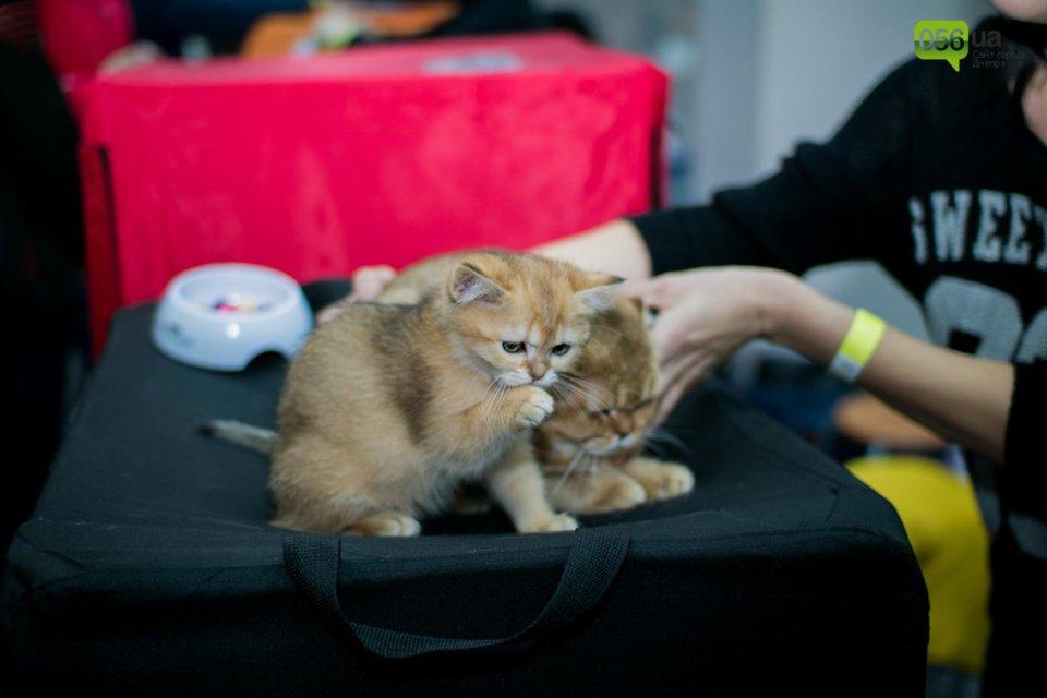 Международная выставка котов в Днепре - фото 94542