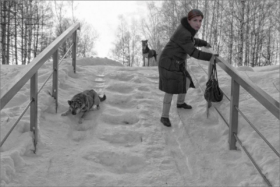 Порошенко, Гройсман и ко: Украинские политики на льду - фото 98037