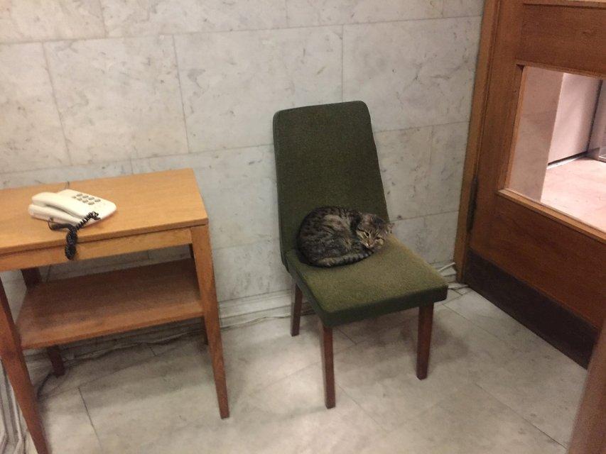 МИД Украины приютило кота Амбассадора - фото 99573