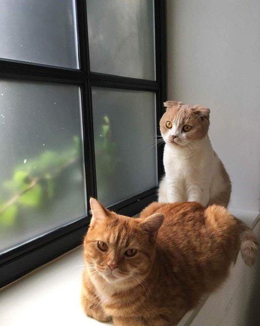 Коты Эда Ширана рады за своего хозяина - фото 103539