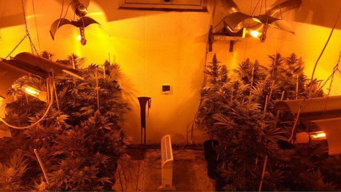 В Киеве разоблачили уютные лаборатории для выращивания каннабиса - фото 108292