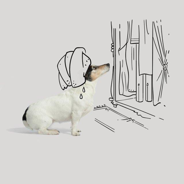 Собака Донателлы Версаче начала зарабатывать деньги - фото 107856