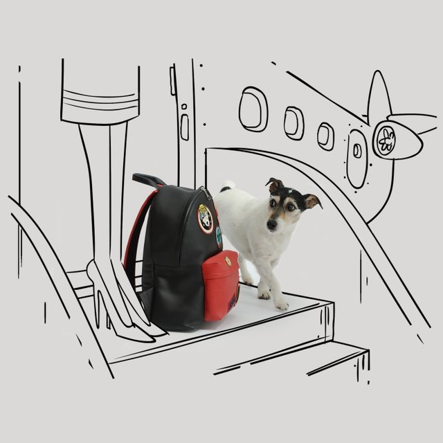 Собака Донателлы Версаче начала зарабатывать деньги - фото 107848
