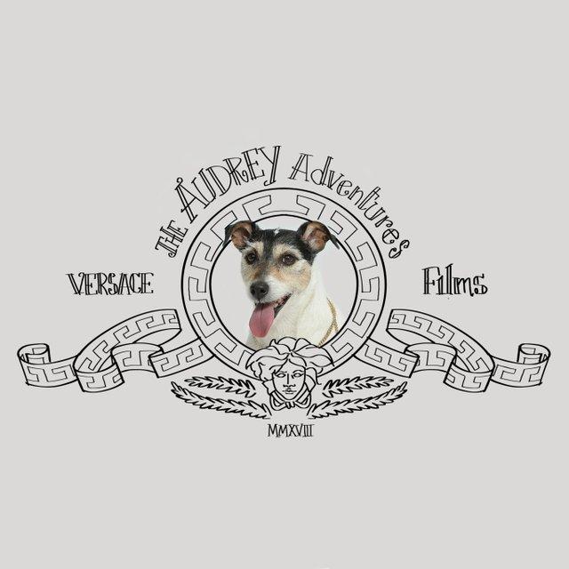 Собака Донателлы Версаче начала зарабатывать деньги - фото 107843