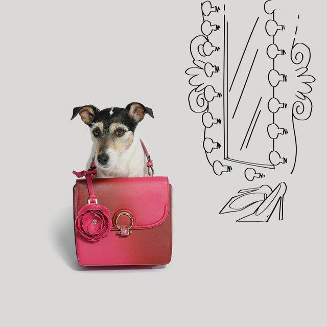 Собака Донателлы Версаче начала зарабатывать деньги - фото 107844