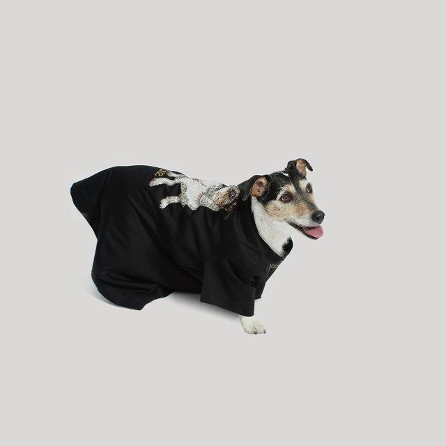 Собака Донателлы Версаче начала зарабатывать деньги - фото 107855