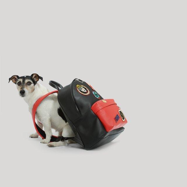 Собака Донателлы Версаче начала зарабатывать деньги - фото 107853