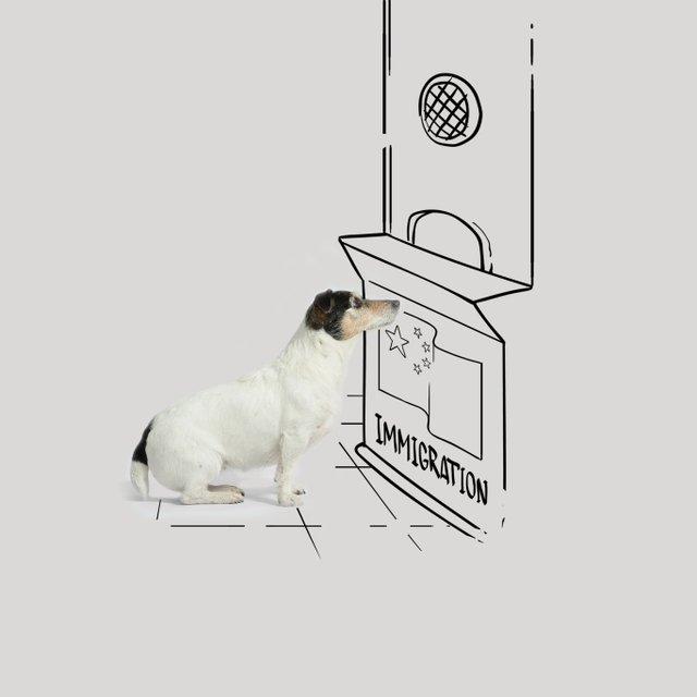 Собака Донателлы Версаче начала зарабатывать деньги - фото 107849