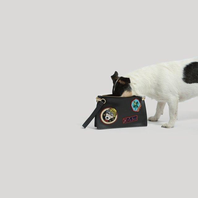 Собака Донателлы Версаче начала зарабатывать деньги - фото 107846