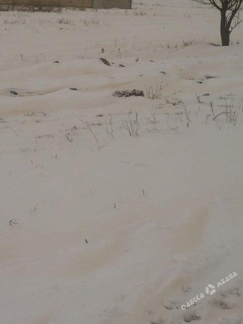 Под Одессой выпал цветной снег, но это нормально - фото 115375