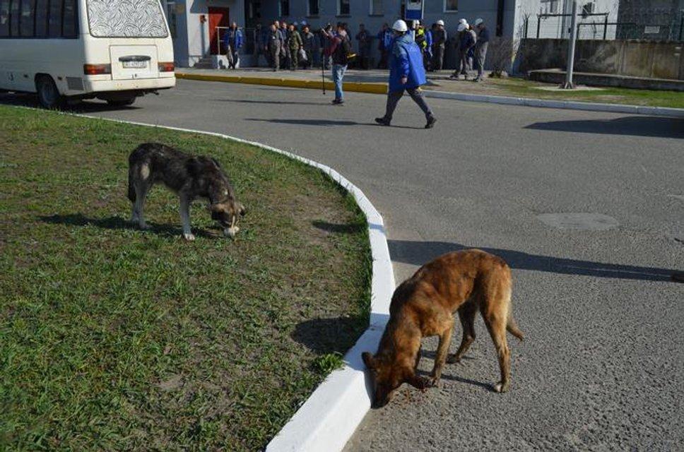 Зона отчуждения - куда не попадают сталкеры: Фоторепортаж из Чернобыля - фото 121226