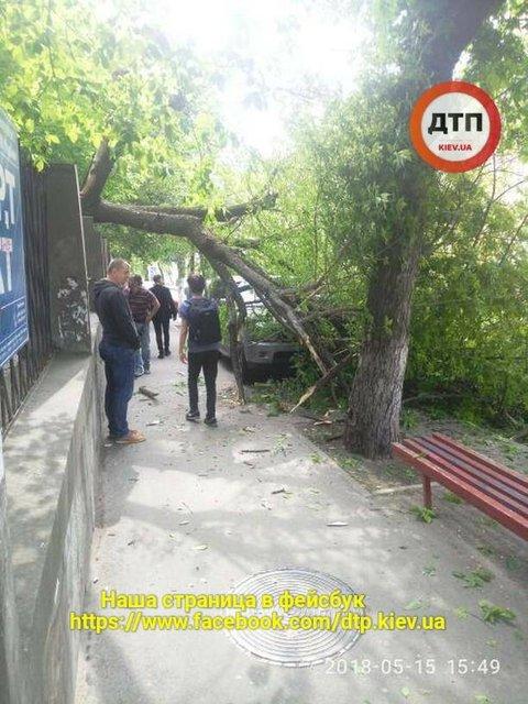 В Киеве дерево пробило крышу Range Rover - фото 125166