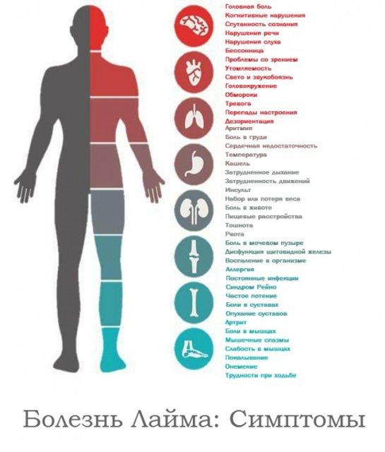 Болезнь Лайма уже в Украине: симптомы и лечение - фото 124063