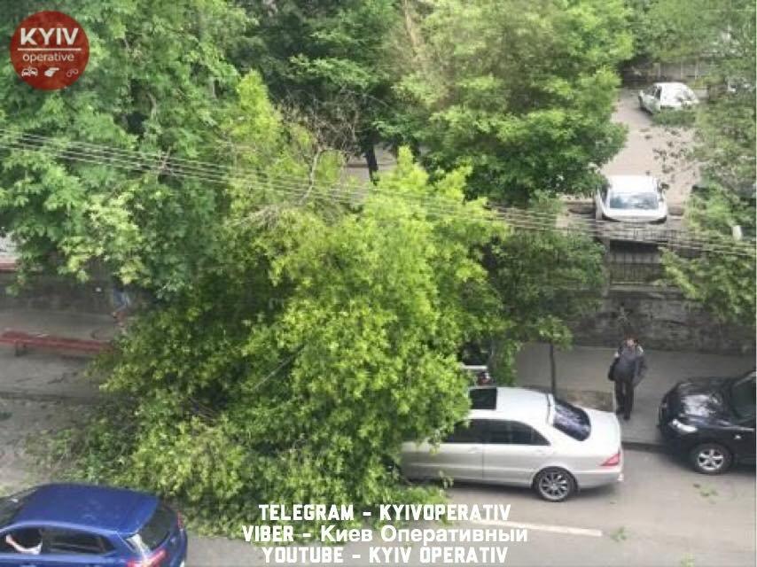 В Киеве дерево пробило крышу Range Rover - фото 125167