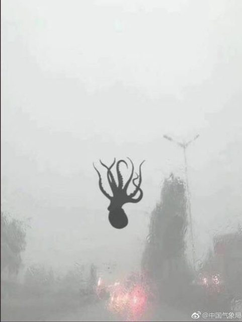 В Китае во время сильного шторма с неба падали морские животные (фото) - фото 131067