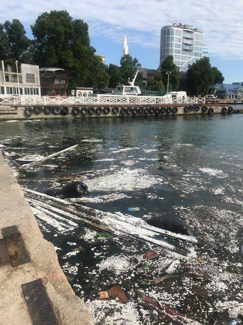 В сети показали ужасающие фото загрязненного моря в оккупированном Крыму - фото 132626
