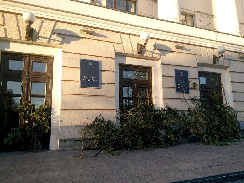 Дефіцити Кальцева: Навіщо у Запоріжжі спиляли півтисячі дерев у центрі міста - фото 140666