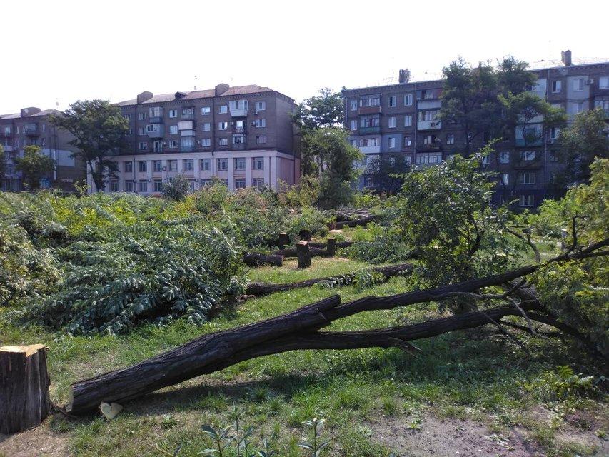 Дефіцити Кальцева: Навіщо у Запоріжжі спиляли півтисячі дерев у центрі міста - фото 140670