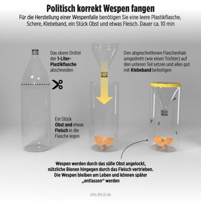 В Германии за убийство осы будут штрафовать на €65 тысяч - фото 141104