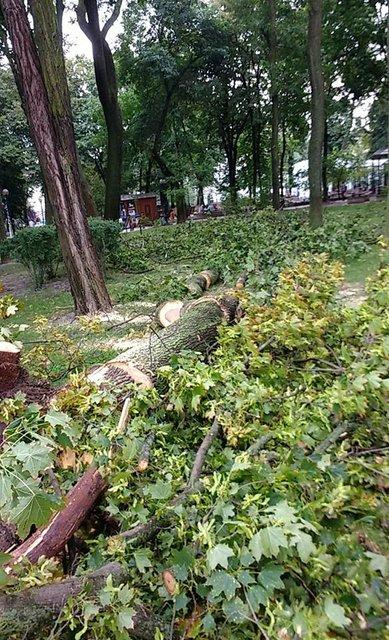 В Киеве выпал град, а ураганный ветер снес деревья и обрушил здание на Крещатике (ФОТО) - фото 141606
