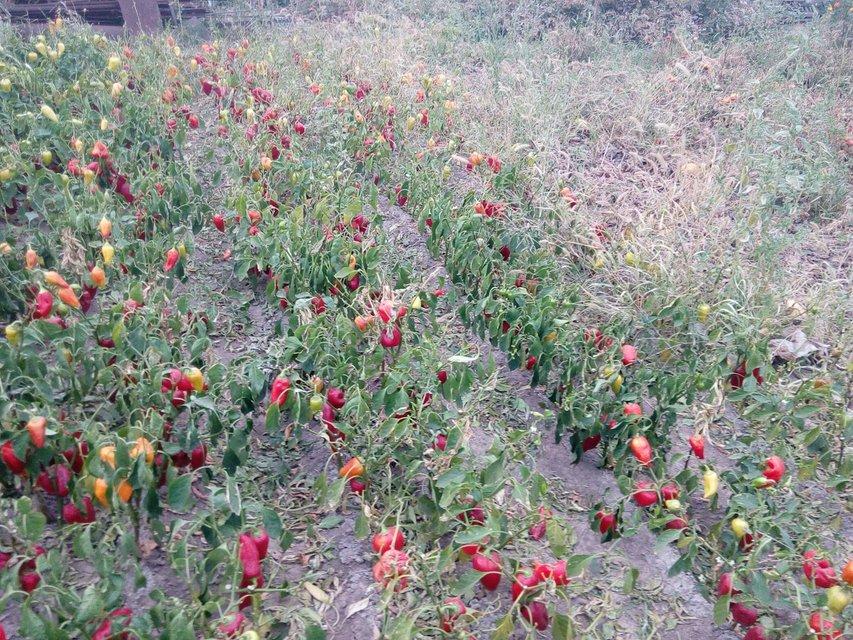 От Припяти до Армянска: Почему замалчивается экологическая катастрофа в Крыму - фото 144188