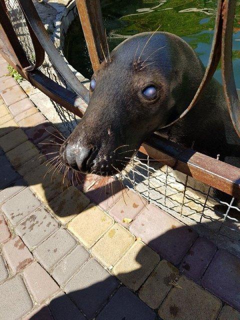 В Крыму коллаборатны и оккупанты уничтожают животных (ФОТО+ВИДЕО) - фото 153445